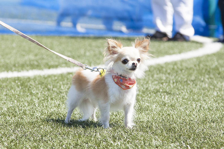 ドッグランは小型犬エリアと大型犬エリアに分かれています