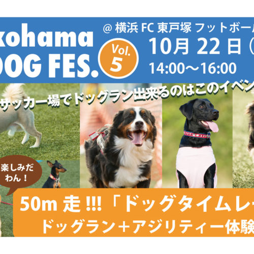 Yokohama DOG FES. Vol.5 10月22日開催!